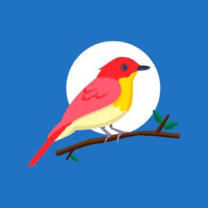 Alt text: Do birds sleep?